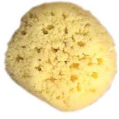Gul Havssvamp, 21-22 cm