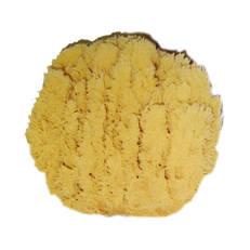 Sjögrässvampen, 13-14 cm